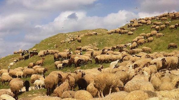 passover lamb, passover, paschal lamb, pesach,