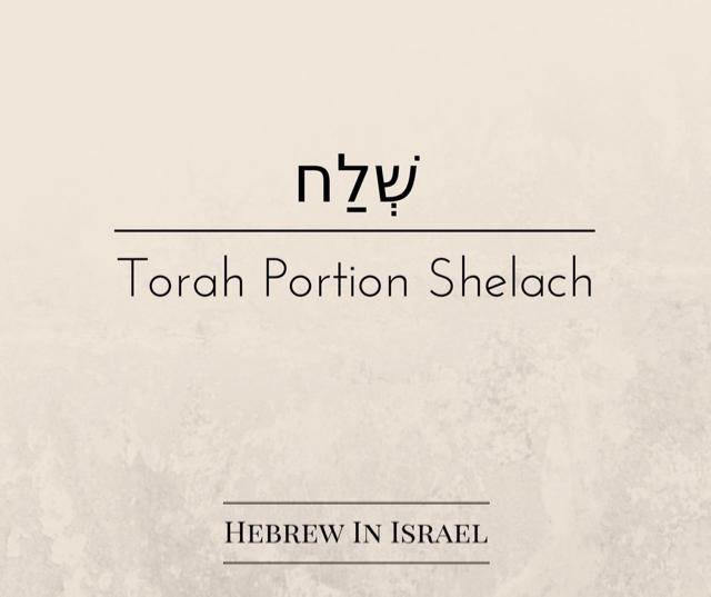 challah, dough, gathering firewood on sabbath, Shelach, torah portion this week, torah portions, tzitzit, weekly torah portion