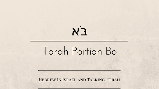 pesach, Passover, Parashat Bo, this weeks torah portion, Torah Portion, Bo, weekly torah portion