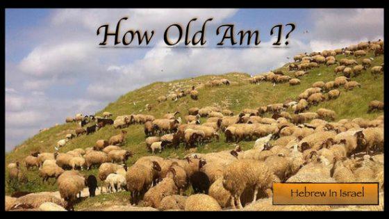 Biblical Hebrew, paschal lamb, passover, passover lamb, pesach, pesach lamb