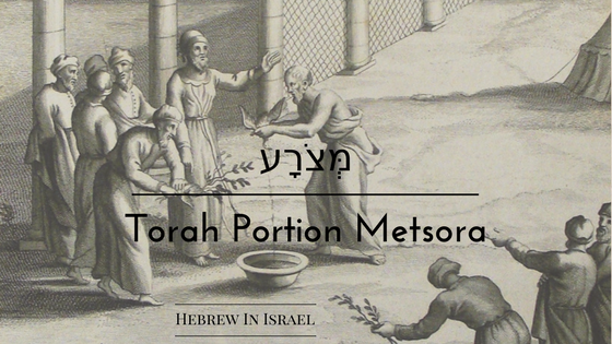 leper, leprosy, leprosy in the bible, leviticus 13, torah portion this week, tzara, weekly torah portion