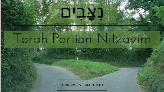 bar mitzvah, bat mitzvah, free will, predestination, this weeks torah portion, torah portion this week, weekly torah portion